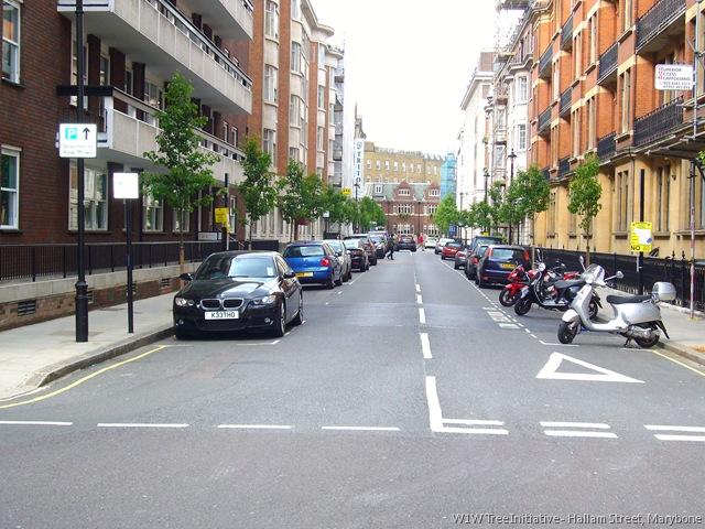 Hallam Street Trees in 2009