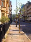 Devonshire Street Trees