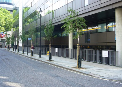 New Trees on Carburton Street