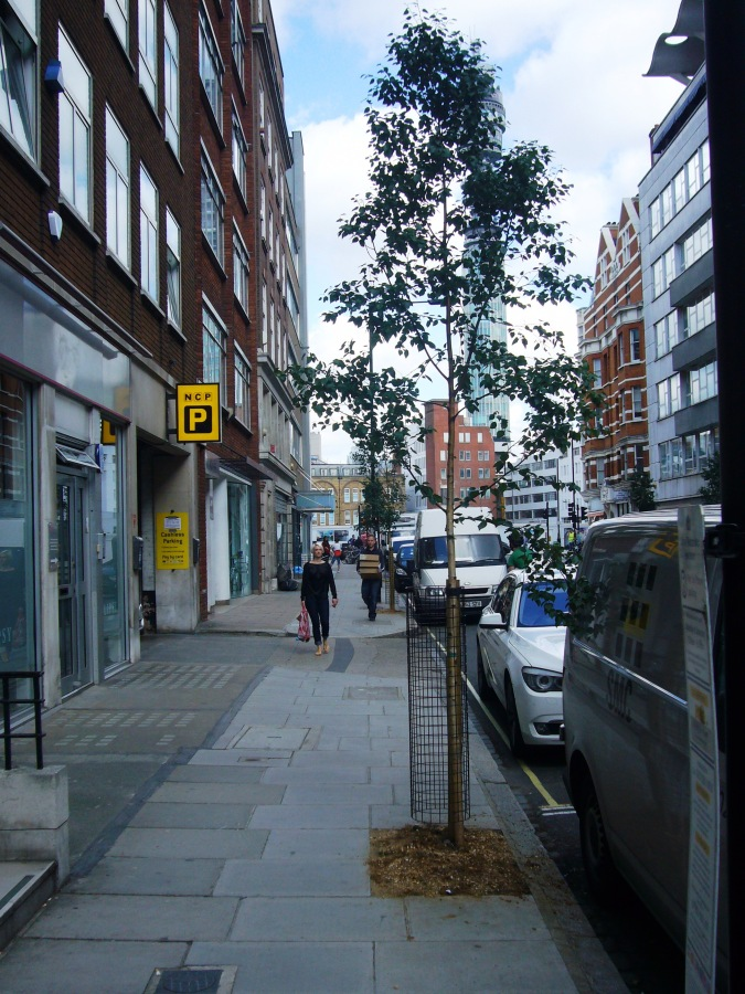 Berners Street Tree Line