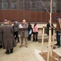 Tree Planting Cleveland Street