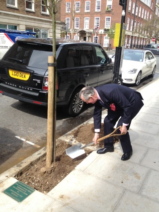 Tree planting on the Streets of Marylebone