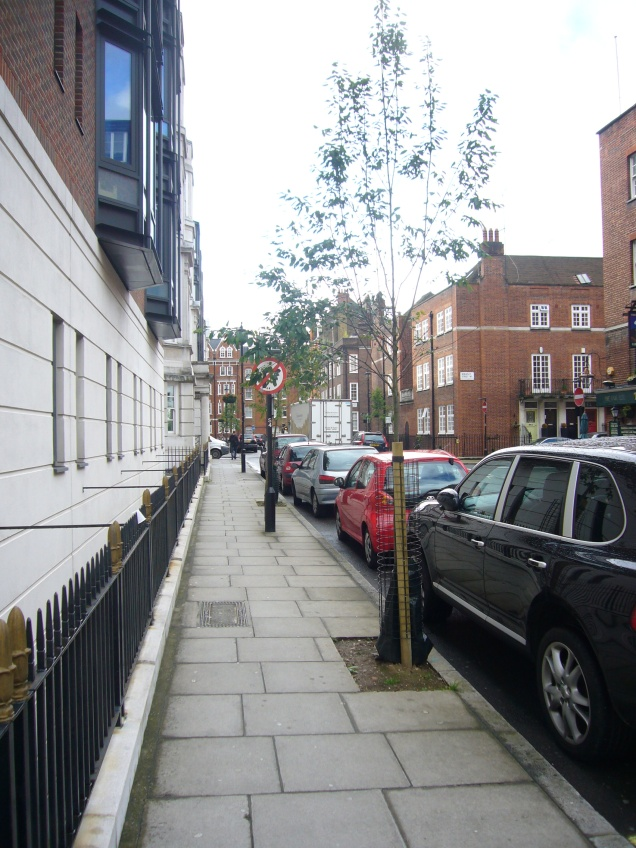 Trees planted in Marylebone