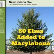 50 marylebone elms