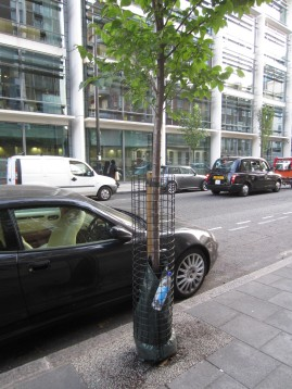 Free the tree from litter!