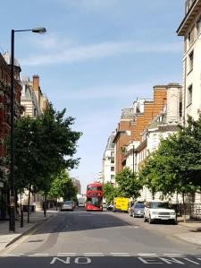 Trees on Devonshire Street